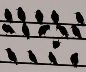 antonimo de conformista, sinonímos de inconformista